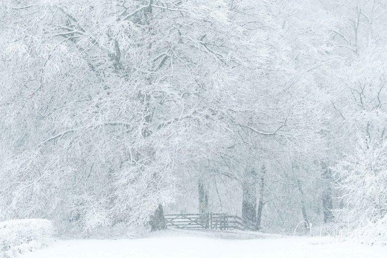 Winter Wonderland - Winter Wonderland in De Bilt