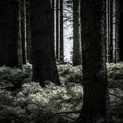 Licht in de duisternis...