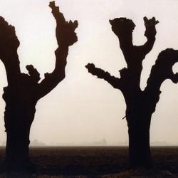 oude bomen in tegenlicht