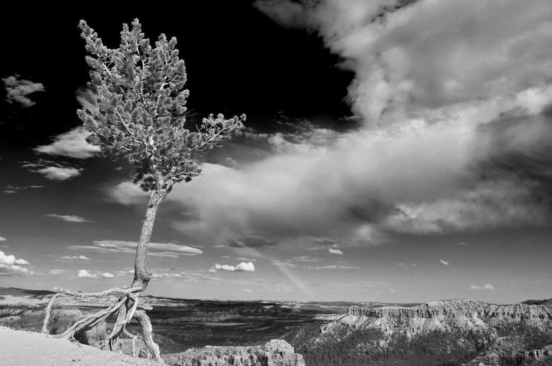 Bryce canyon - kleurenfoto omgezet naar zwart/wit en daarbij de lucht extra donker gemaakt om wat meer contrast met het groen van de boom te verkrijge