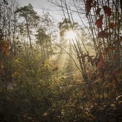 Misty Fairytale Morning!