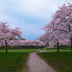 Bloesempark in het Amsterdamse Bos