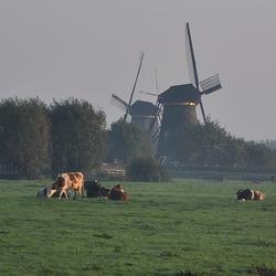Kinderdijk in de ochtendnevel