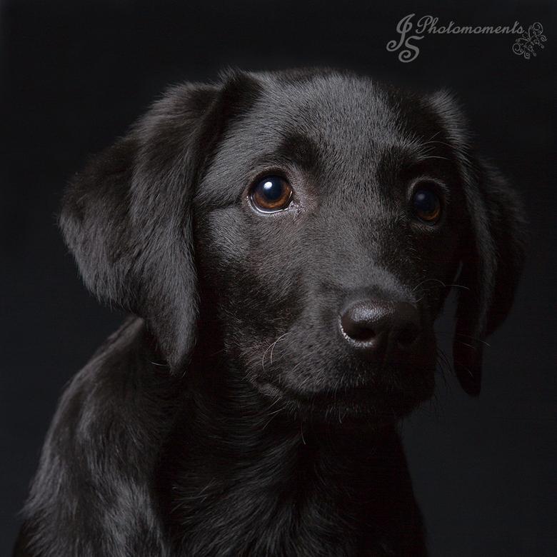 bowi - de hond moest ook op de foto. maar was nog een puppy. Hartstikke moeilijk dus. Zeker om scherp op te stellen. Maar deze kwam verrassend genoeg