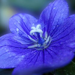 blauw en nat
