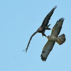 Lucht Acrobatiek
