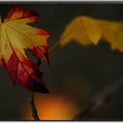 Een beetje herfst nog