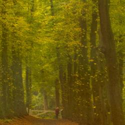 Autumn . . . .