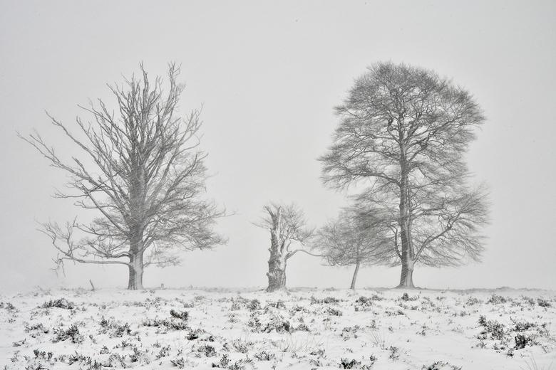 Sneeuwlandschap.........