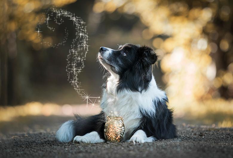 Magical Mack - Magical Wizard Of Oz of gewoon kortweg Mack, is de hond van mijn beste vriendin Hanne. Ik had al een tijdje het idee om een dromerige h