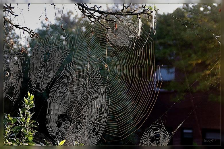 webben - gewoon in de tuin op een vroege morgen