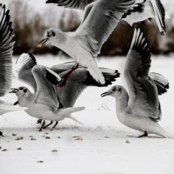 Honger in de sneeuw