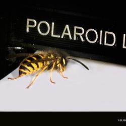 A blanco polaroid
