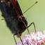 Vlinderontbijt
