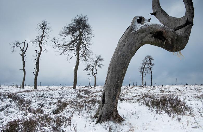 Cold and Crooked - Afgelopen kerstvakantie heb ik de Hoge Venen in België bezocht, een uniek landschap wat ik in prachtige winterse omstandigheden heb