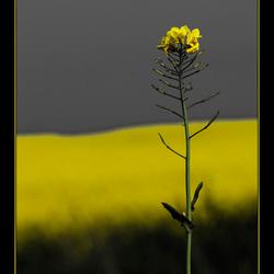 op zoek naar geel 2