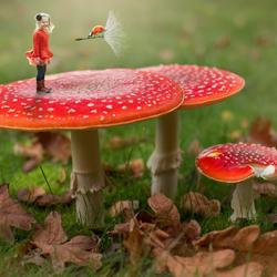 nora en de paddenstoel