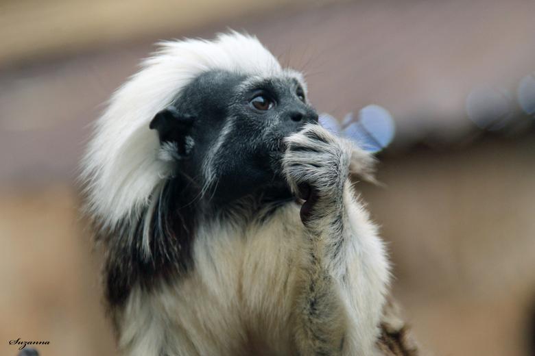 schattig aapje - nieuwsgierig dat ze zijn.