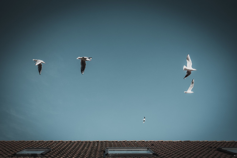 Free - birds