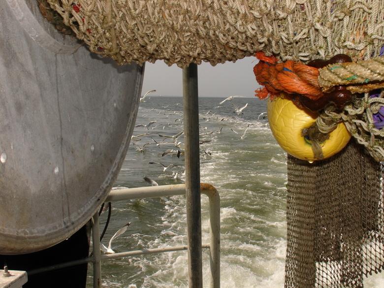 lekker visje eten - meeuwen achter de vissersboot