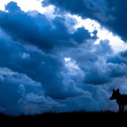 Vos met wolken.