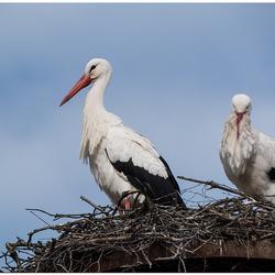 nest in orde maken