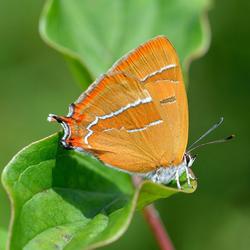 In de vlindertuin 1