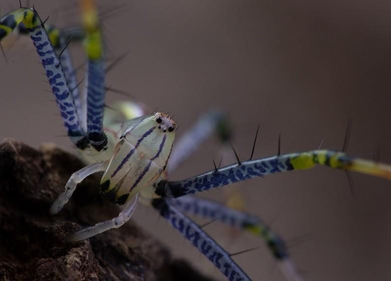 van dichtbij - spin heeft een jasje uitgetrokken en is weer een beetje groter gegroeid..tijd voor een mega close up..en dat is best lastig ..niet datt
