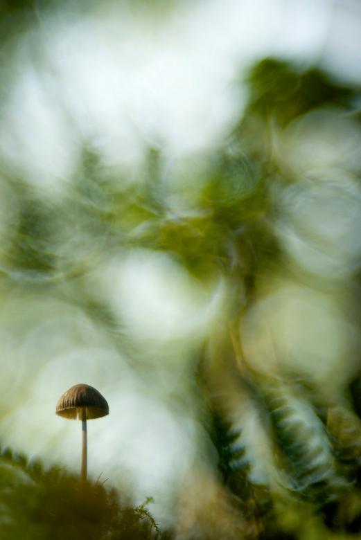 Wonders of the forest - Ik blijf me nog elke keer verbazen als ik door mijn zoeker kijk. Al die mooie vormen en kleuren die je zonder camera niet ziet