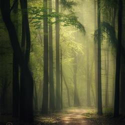 The beam of light