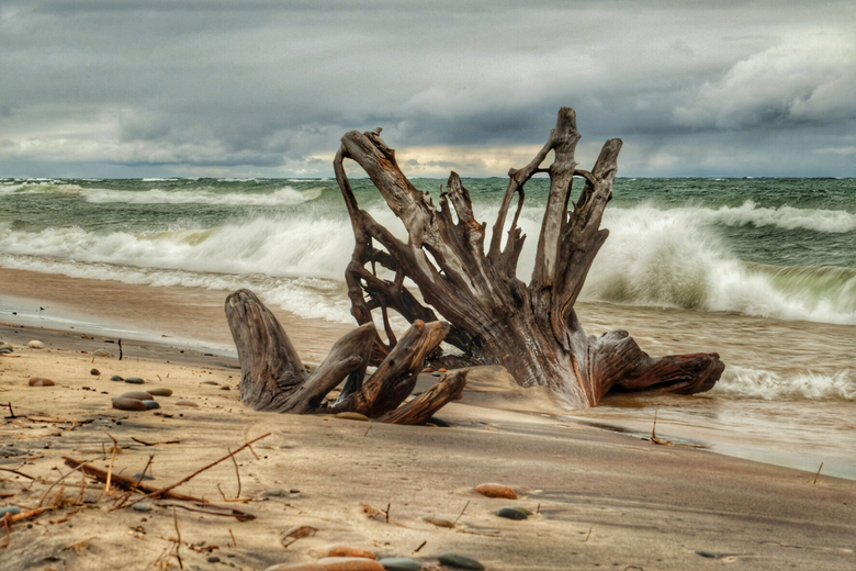 Trunks on the beach - Boomstammen aangespoeld op strand bij Whitefish Point (Lake Superior VS)
