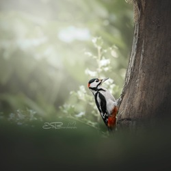 woodpecker in the light