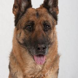 """Hondenportret """"Elke"""""""