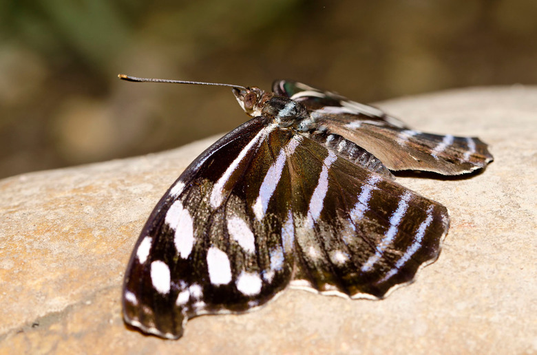 Vlinder aan het opwarmen_DSC0525