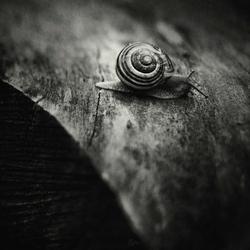 31 Days of Stillness ~ Slowly