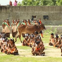 India, poor cow