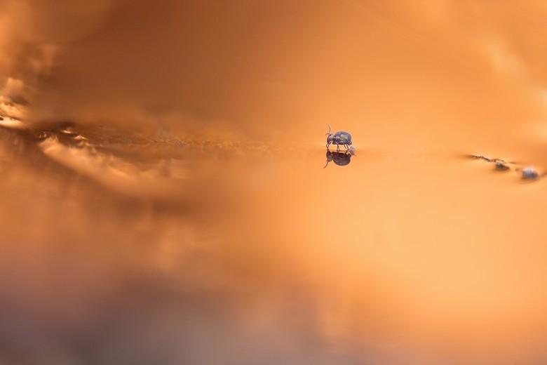 in golden light - eindelijk eindelijk een  springstaartje wat héél even stil wou gaan zitten op een mooi plekje