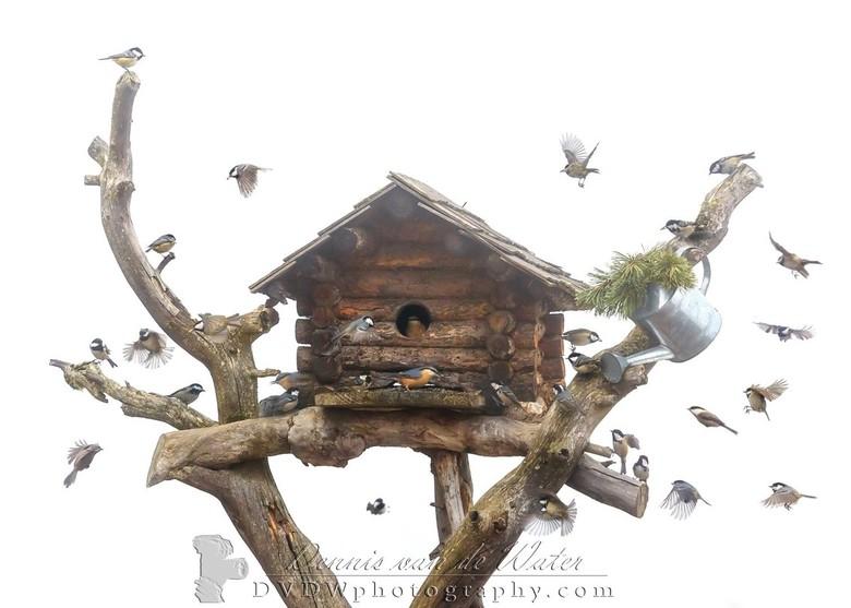 Collage van mezen en een boomklever bij een vogelhuis  - Kleine selectie van onze vakantie naar de Dolomieten in 2016 <br /> <br /> <br /> https://