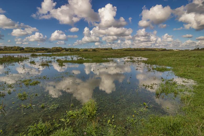 Mirror in Grasslands