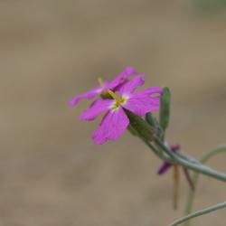 bloemtje