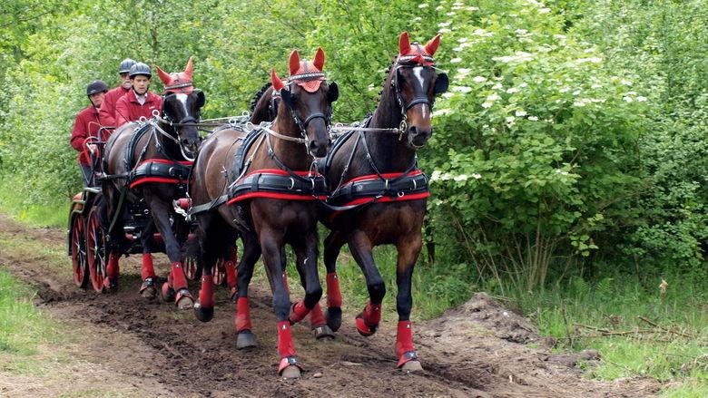 rode sokken, oren en jassen - De enige Duitse inzending op de wedstrijd in de  Slabroekse bossen