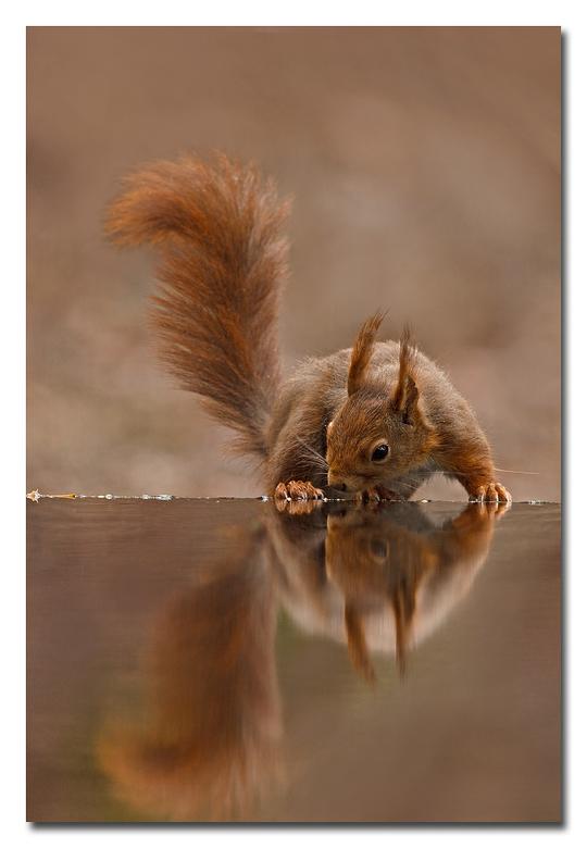 Spiegelbeeld.........