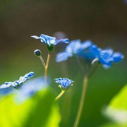 Zonnige lente dagen