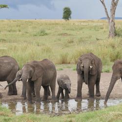 Olifanten familie bij waterpoel