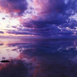 Reef reflectie