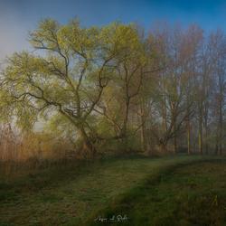 Sunrise @ the Biesbosch