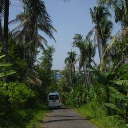 Natuur op Java