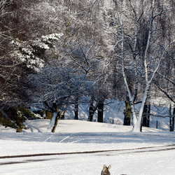 Zebra in sneeuw