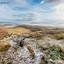Spelende hondjes op een berg in IJsland