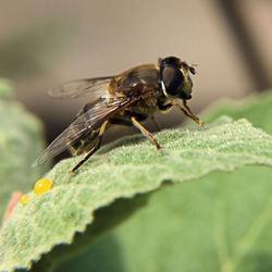 Bij met nectar
